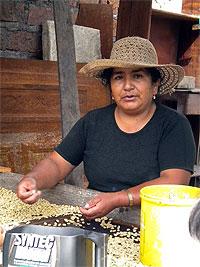 a-woman-selecting-coffee-in-malacatos-near-vilcabamba